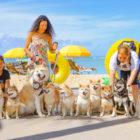 【取材】ハワイの柴犬に会ってきました!10頭が集結!