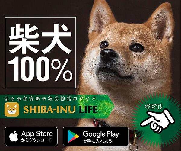 柴犬ライフ,アプリ