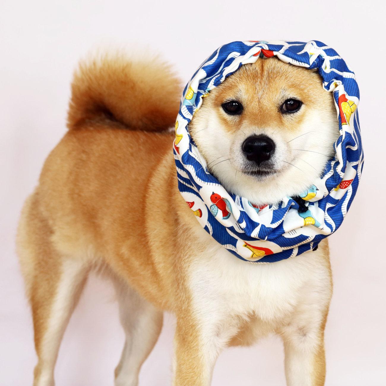 柴犬,クールスヌード