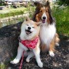 【取材】「ええあんばい」で17歳に。オーナーも犬も頑張りすぎないのが長寿の秘訣 #7ココ